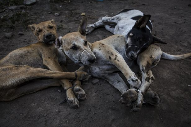 Indonesians-Taste-for-Dog-Meat-Grows-In-Popularity